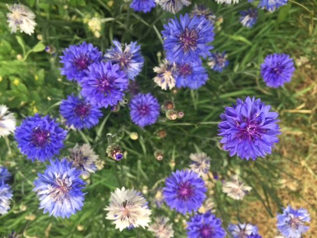 British flowers, wiltshire